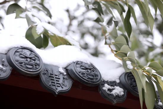 泉城飘雪似仙境 赏月拍照乐不停