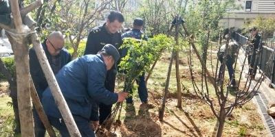 """向毀綠種菜說""""不""""!濟南中海社區1500平私種果樹被清理"""
