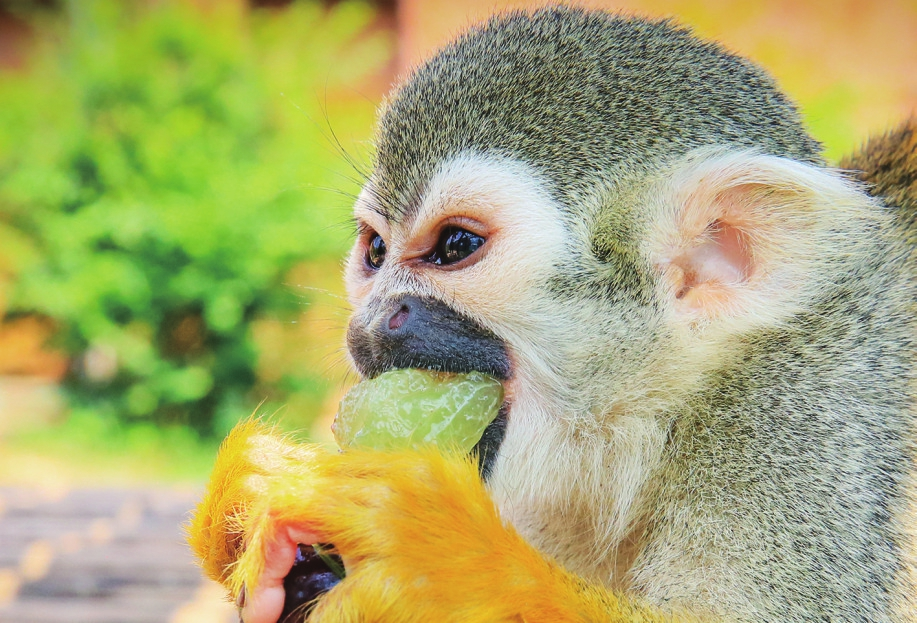 济南野生动物世界 动物防暑有凉方